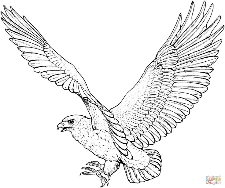 Red tailed pencil and. Falcon clipart hawk