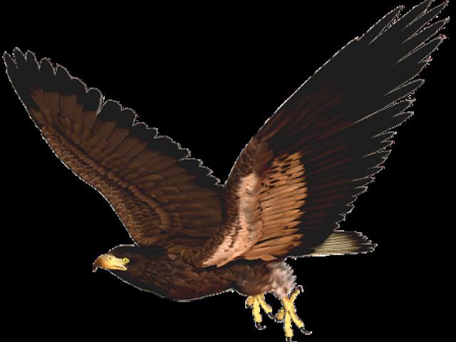 Hawk clipart skyview.  huge freebie download