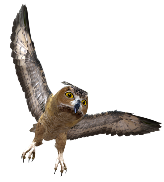 Owl in flight png. Falcon clipart illustration