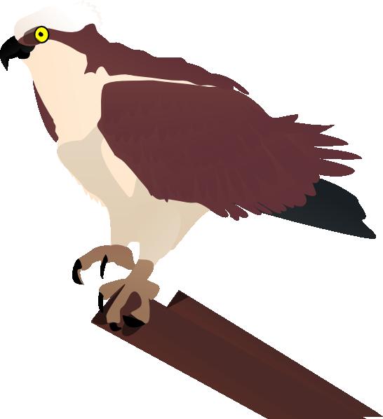 Osprey clip art at. Falcon clipart large bird