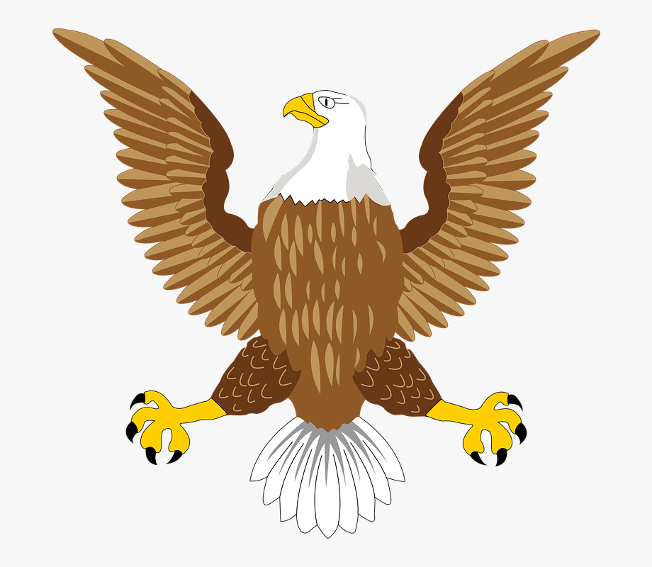 Falcon clipart large bird. Download free birds png