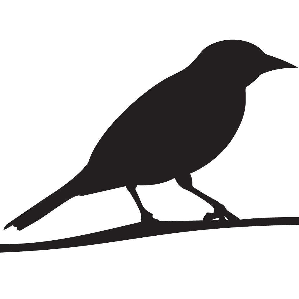 Baltimore cornell lab of. Falcon clipart oriole bird