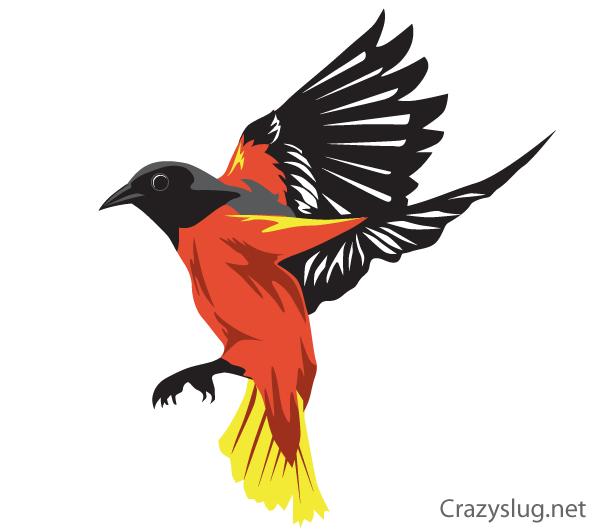 Falcon clipart oriole bird. Vector free vectors birds
