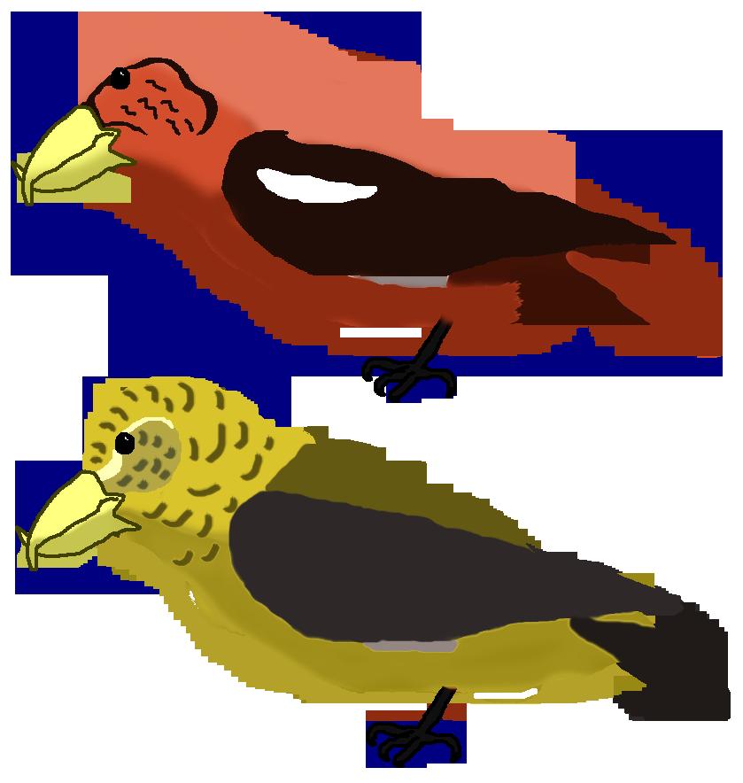 All birds wiki fandom. Falcon clipart oriole bird