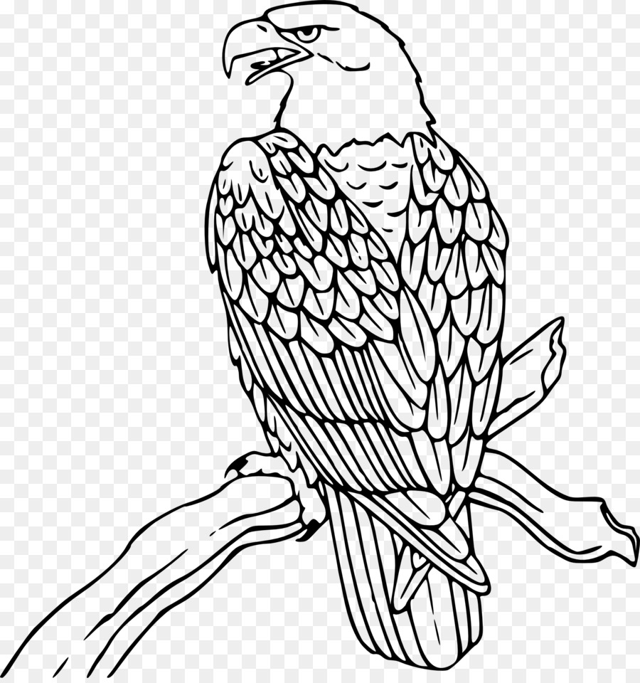 Cliparts x making the. Falcon clipart outline