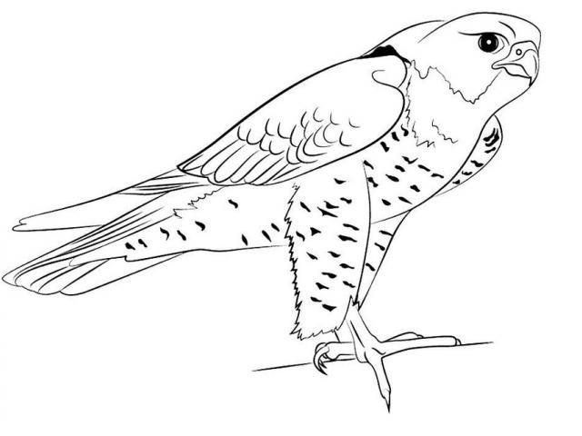 Falcon clipart peregrine falcon. Free download clip art