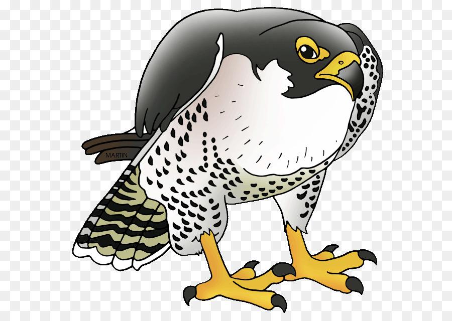 Falcon clipart peregrine falcon. Bird wing transparent clip