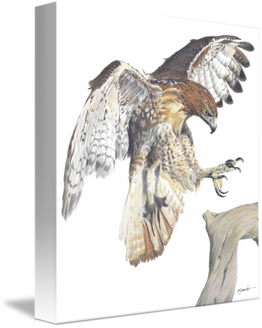 Redtail by slimpickins . Falcon clipart red tailed hawk