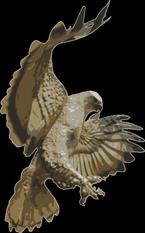 Falcon clipart red tailed hawk. Accipitriformes clip art transprent
