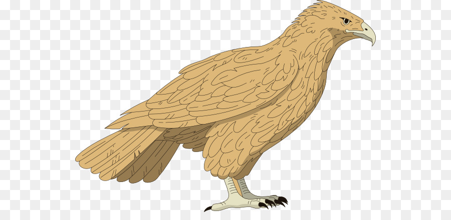 Eagle bird png download. Falcon clipart red tailed hawk