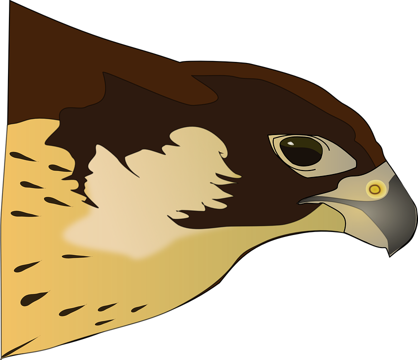 Collection of free halk. Falcon clipart red tailed hawk