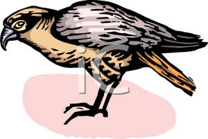 Falcon clipart small. A standing royalty free