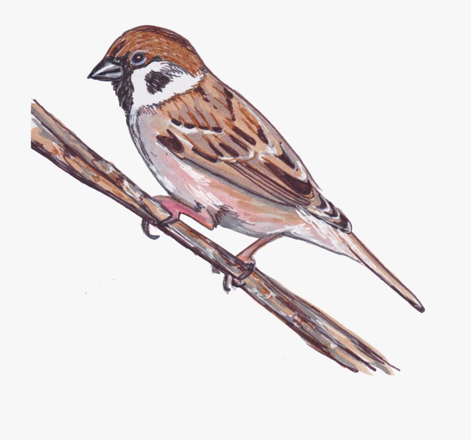 Falcon clipart sparrow. House cliparts cartoons
