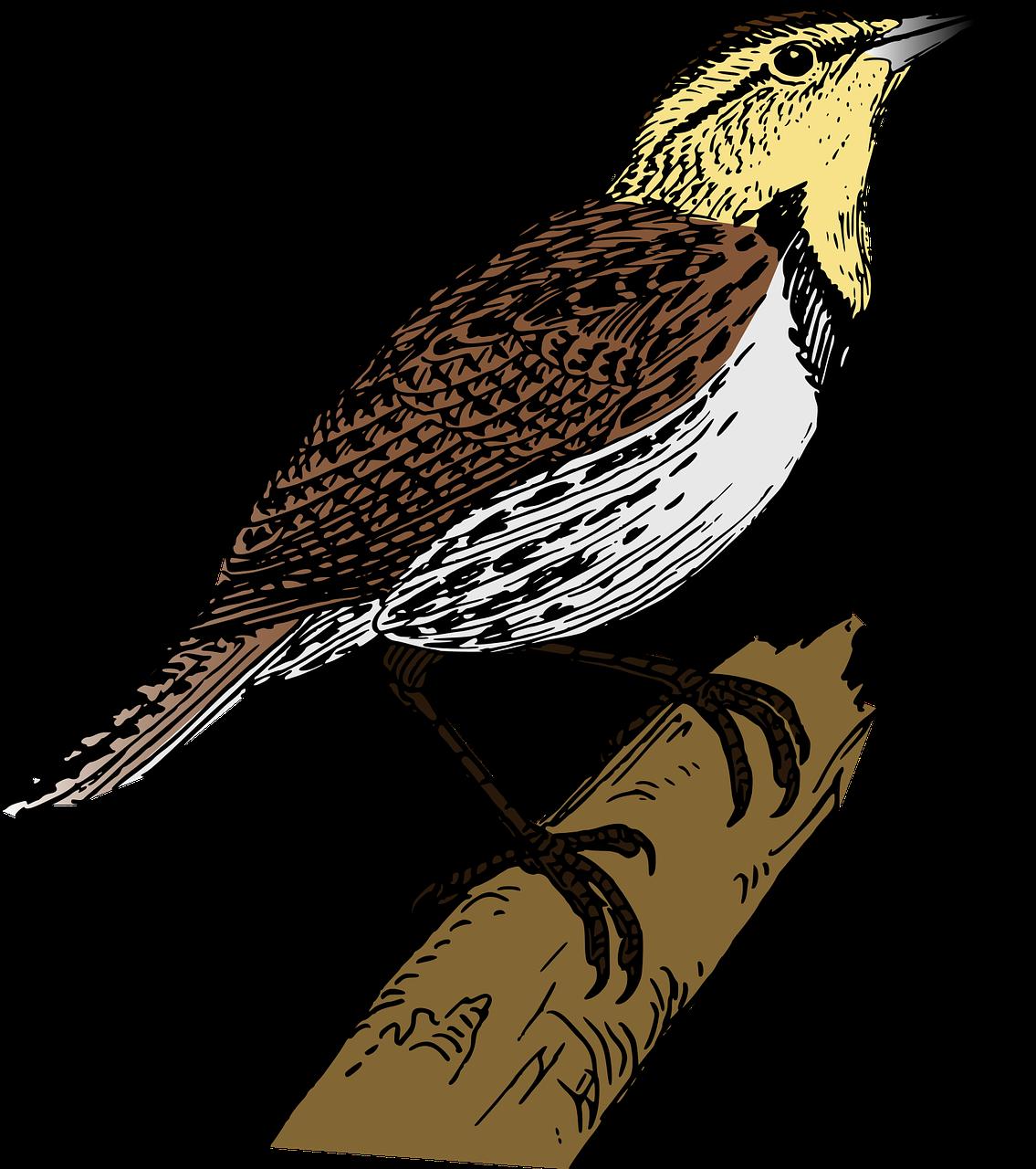 Falcon clipart sparrow. Lark download clip art
