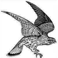 Download hawk free png. Falcon clipart sparrow