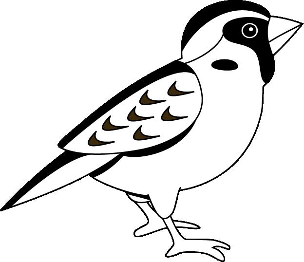 Falcon clipart sparrow.  collection of high