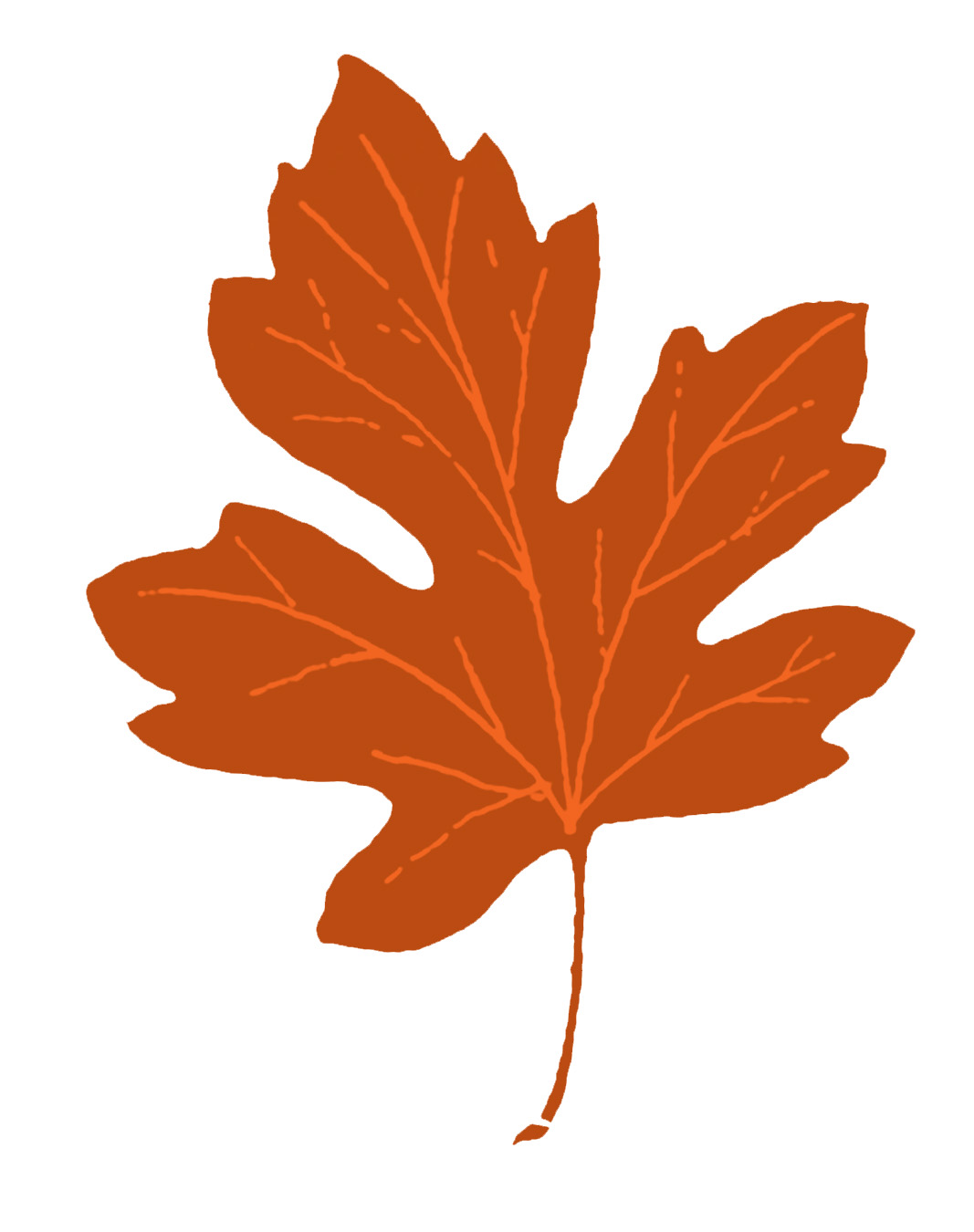 Vintage clip art maple. Fall clipart