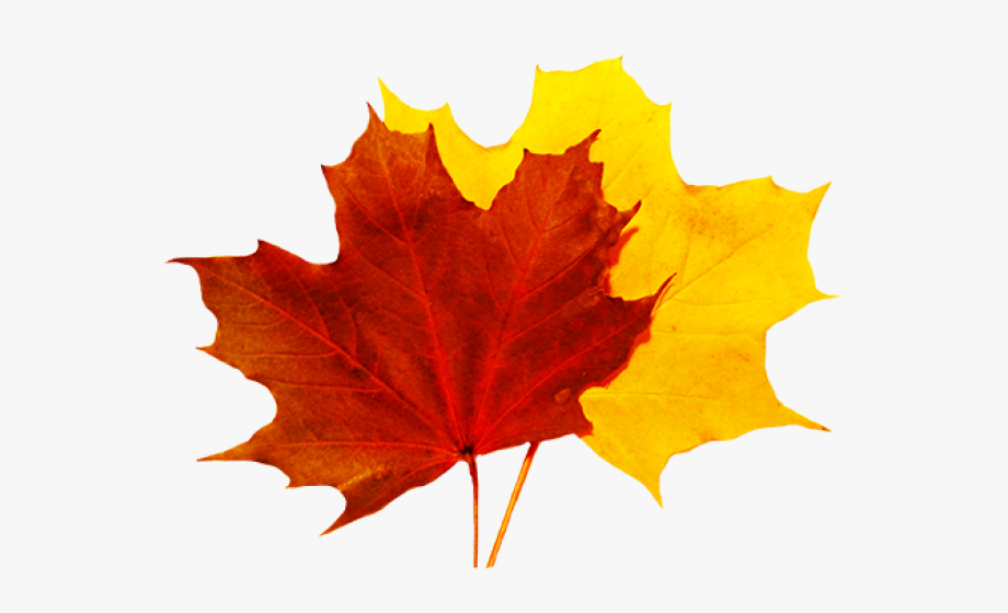 Leaves clipart 5 leave. Autumn fall leaf no