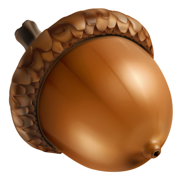 Harvest clipart acorn. Png image sz fall