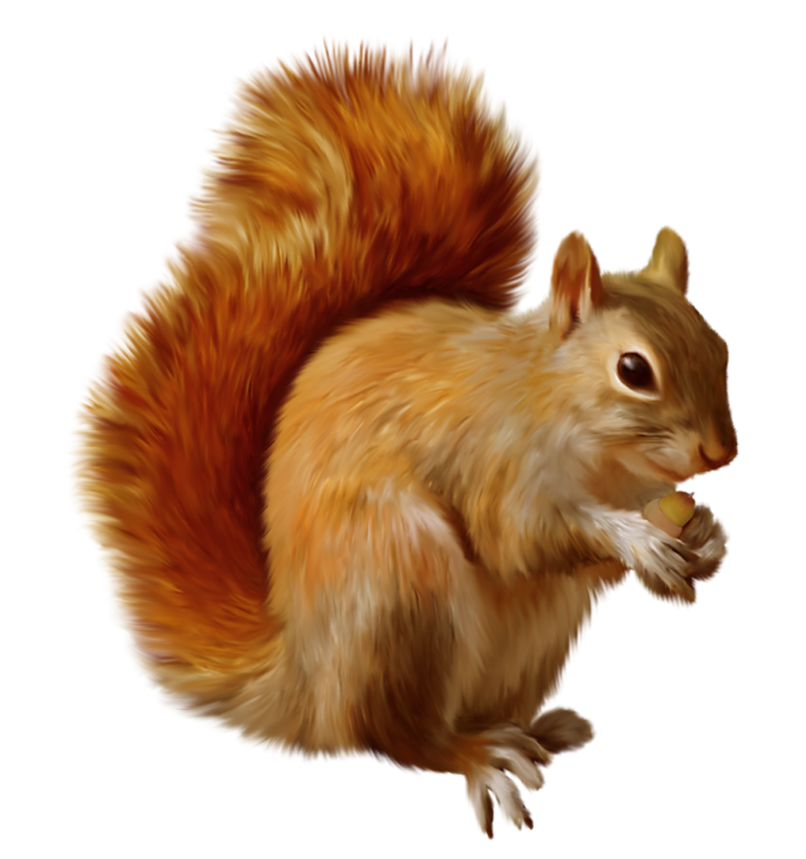 Fall clipart autumn animal. Squirrel png pinterest fox