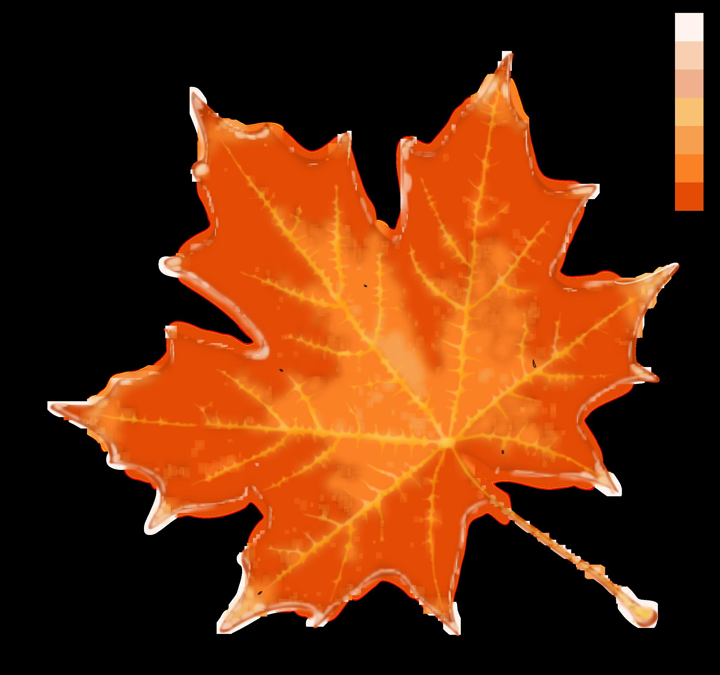 Autumn leaf color stock. Fall clipart maple tree