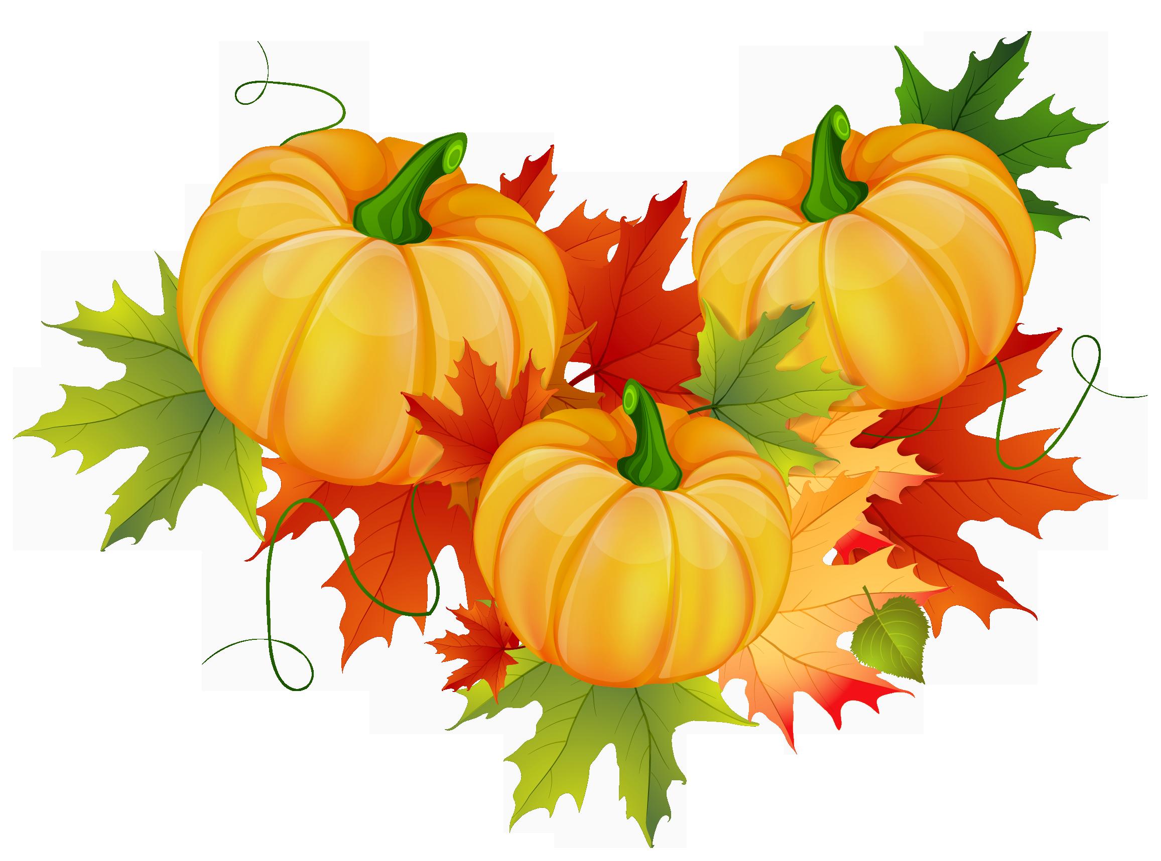 Pumpkin decoration png pinterest. Floral clipart thanksgiving