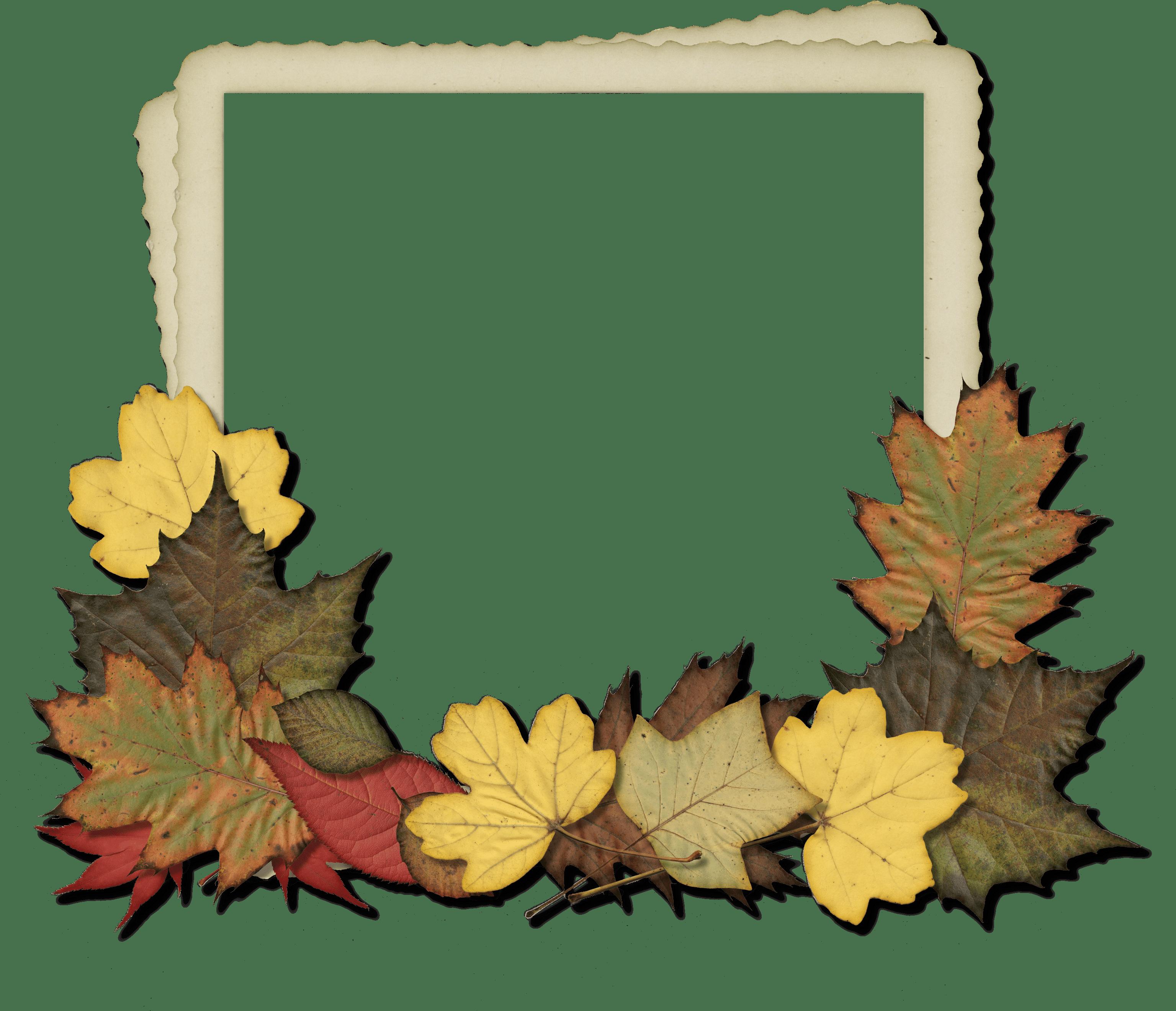Freebie cu leaves hg. Fall frame png