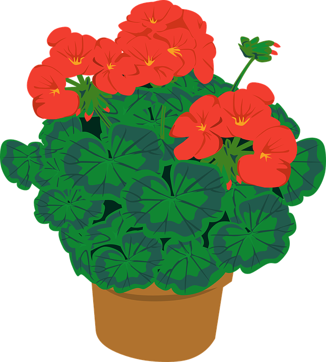 Gardening clipart kitchen garden. Gotta but the geranium