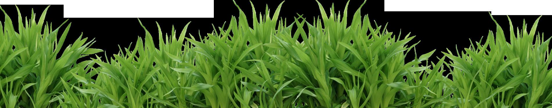 Grass png images pictures. Farm clipart pasture
