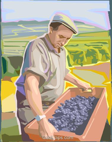 . Grape clipart farmer