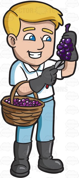Download of grape clip. Grapes clipart farmer