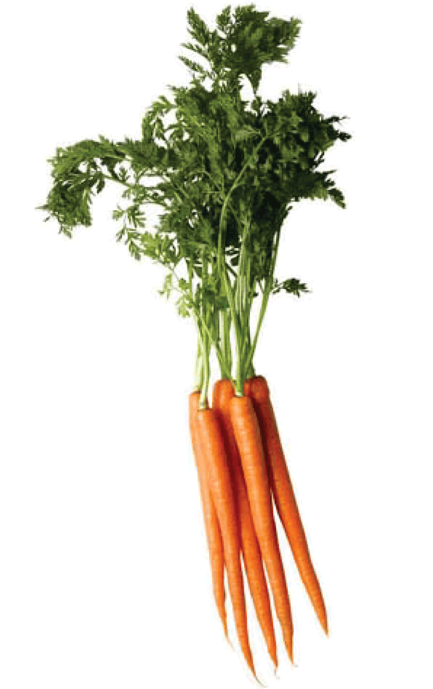 vegetables clipart carrot stick