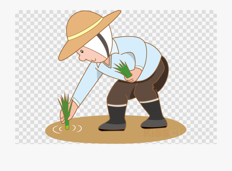 Rice clipart rice cultivation. Farmer planting cliparts