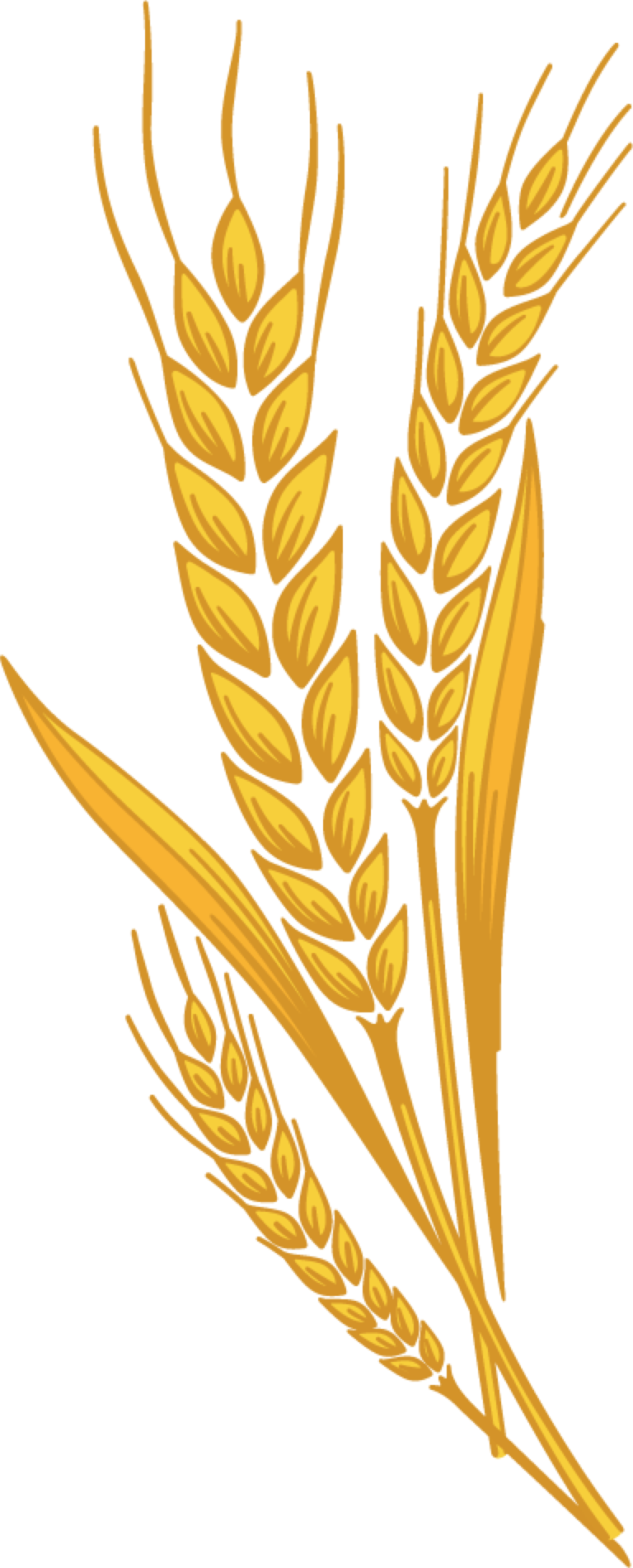 Wheat clipart wheat seed. Collection of free grained