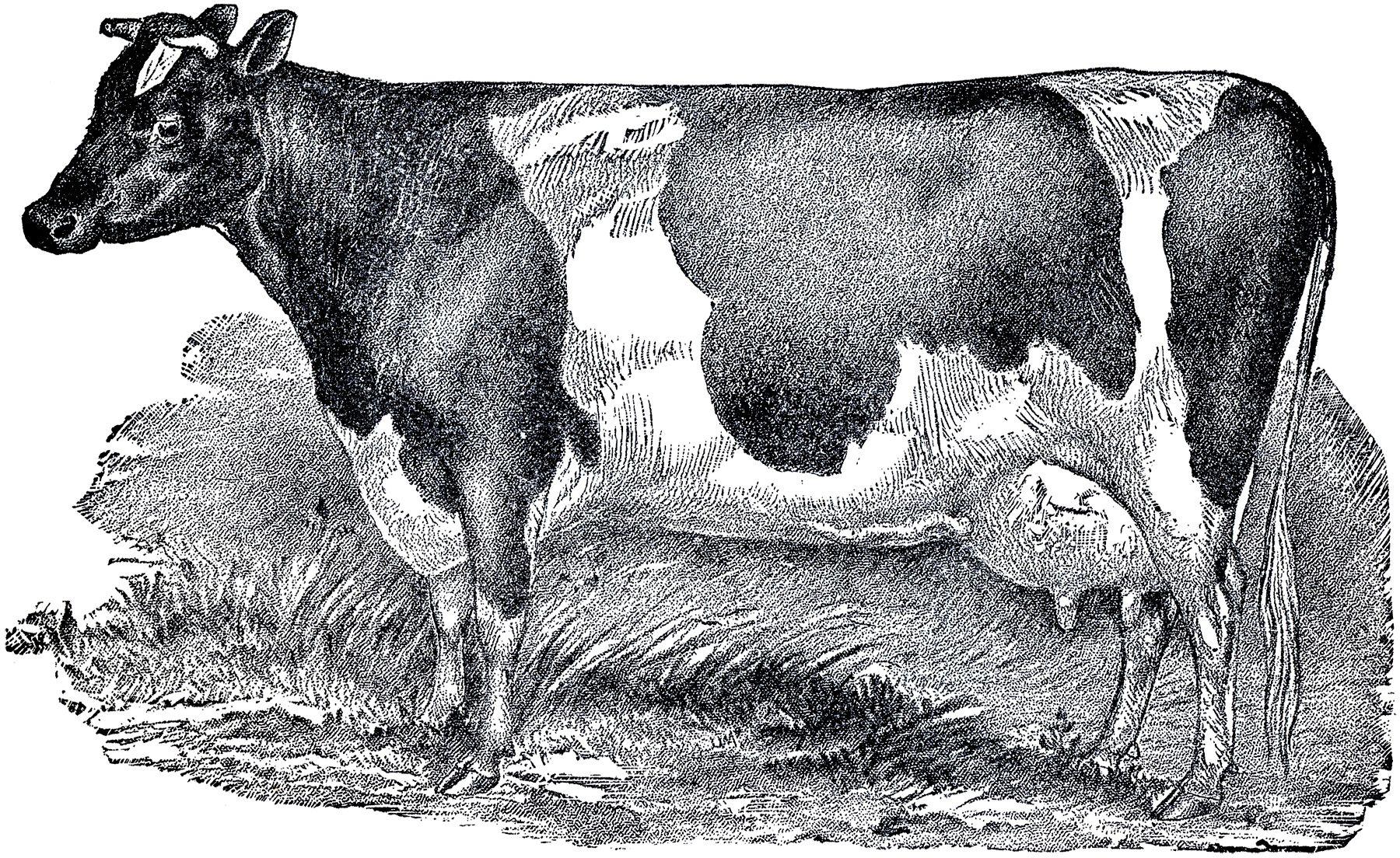 Farmhouse clipart cow.  images style clip