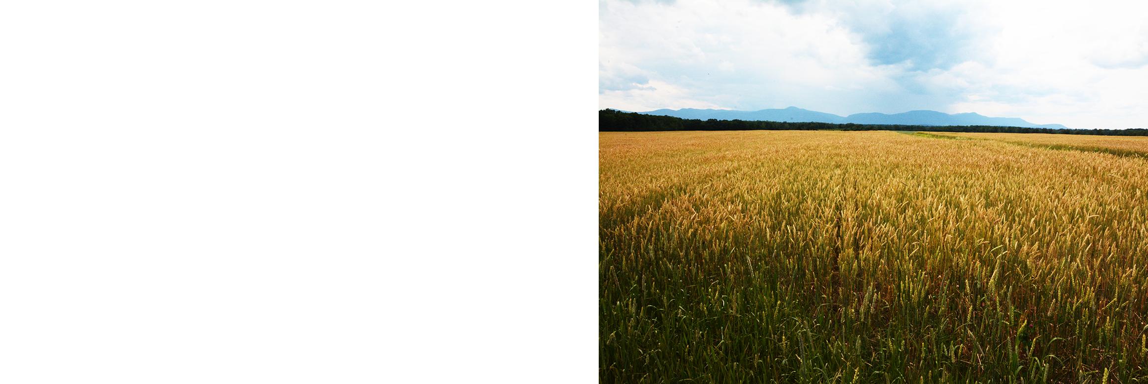 Land clipart wheat field. Stone house grain farm