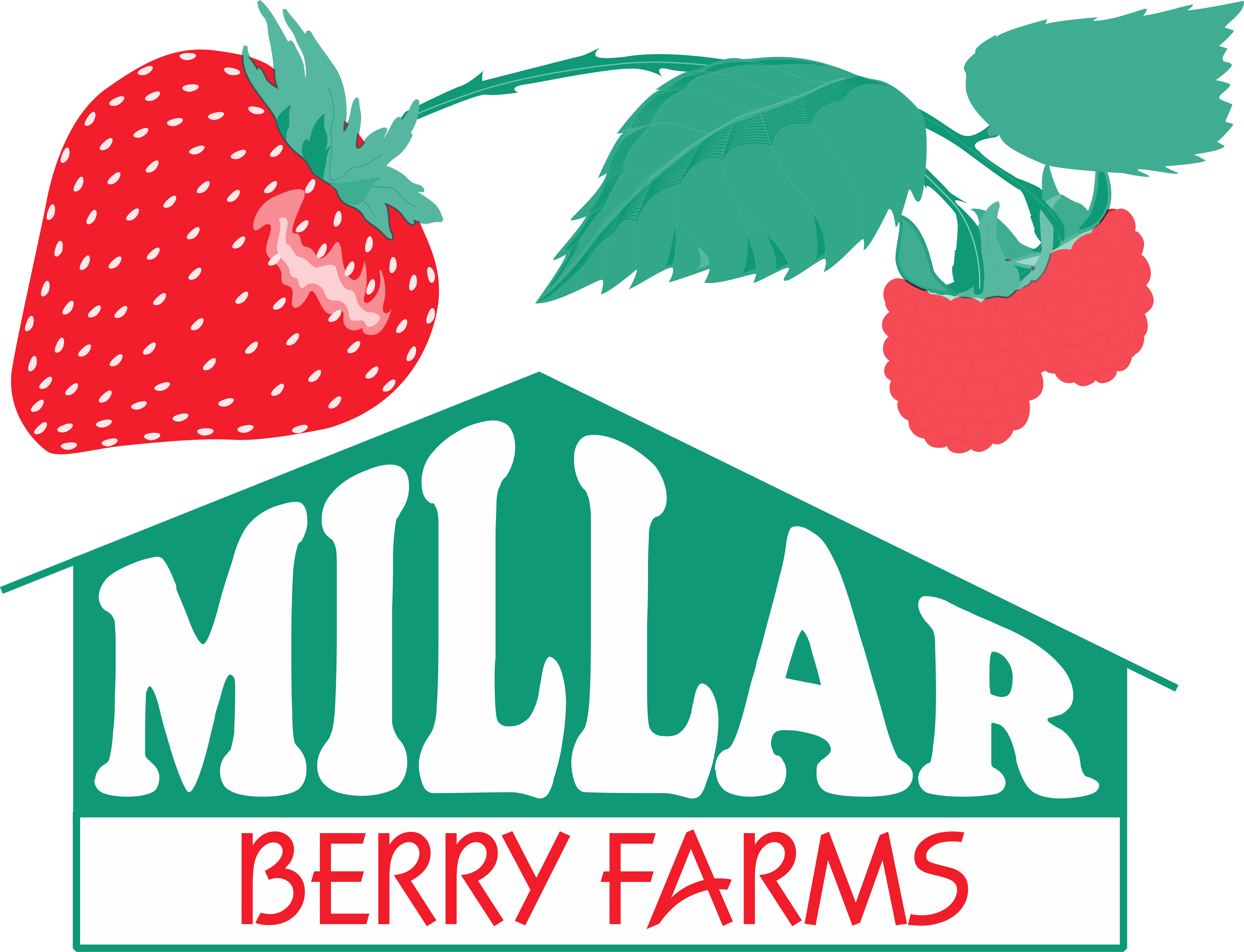 Millar berry farms . Farming clipart strawberry farm