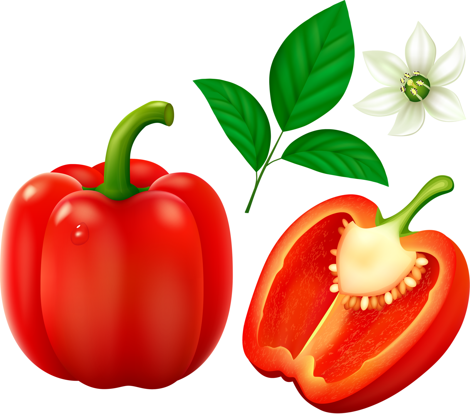 Peppers clipart drawing. Red bell pepper bulgarian