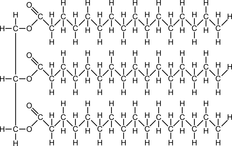 Molecule medium image png. Fat clipart fatso
