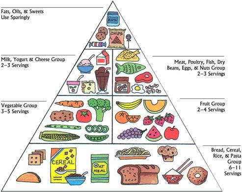 Meat clipart food pyramid. Pin on pcos