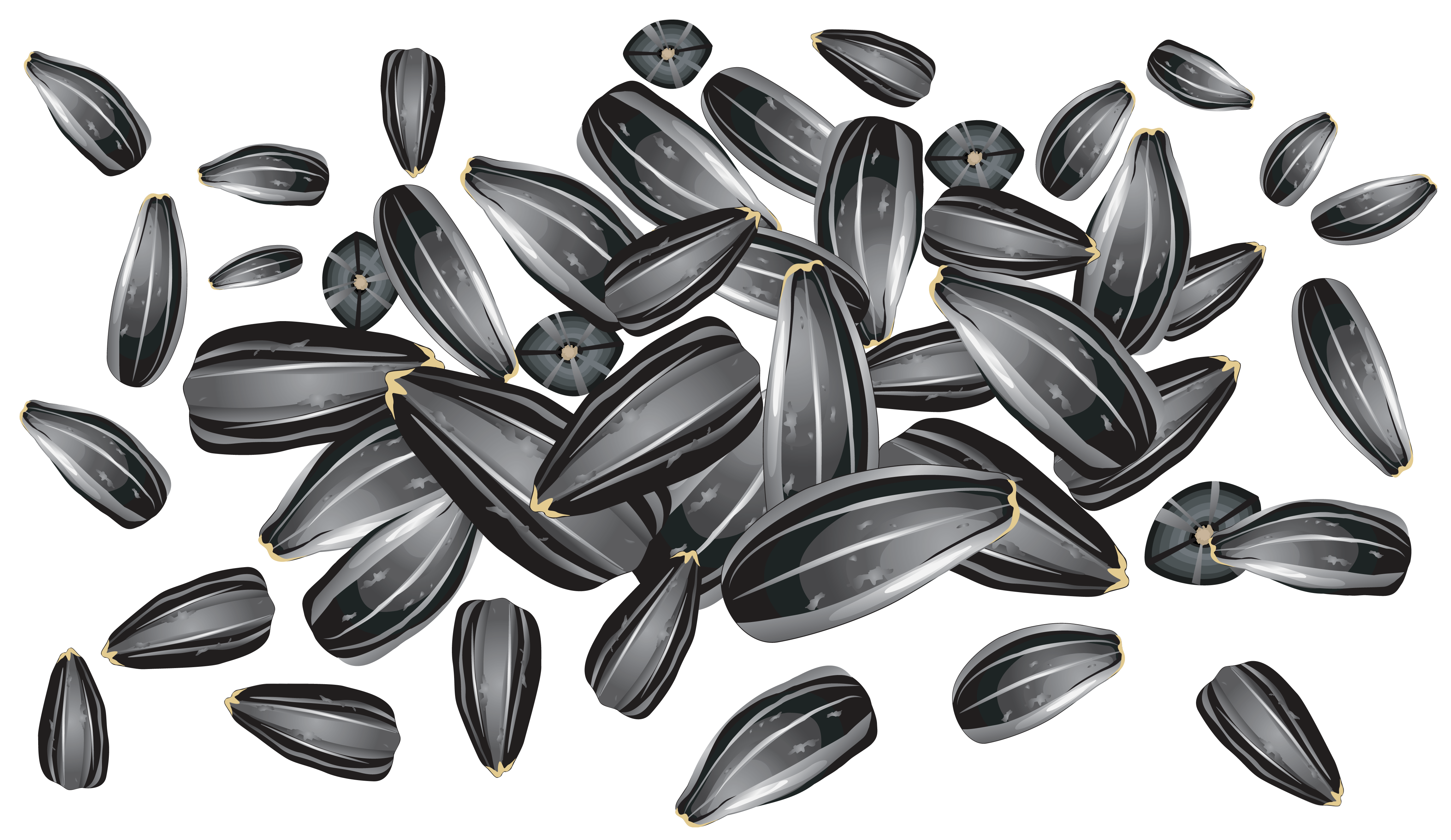 Sunflower seeds png images. Nuts clipart different seed