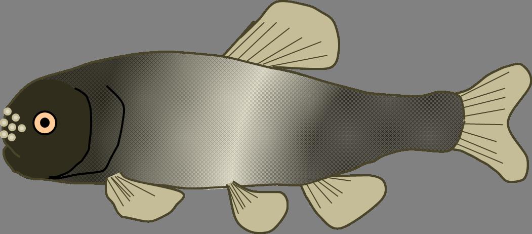 New haiku jason s. Father clipart fish