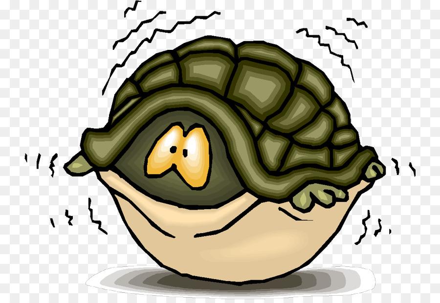 Turtle shell sea clip. Fear clipart