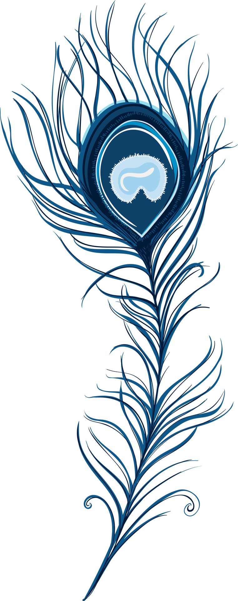 collection of peacock. Feather clipart artistic