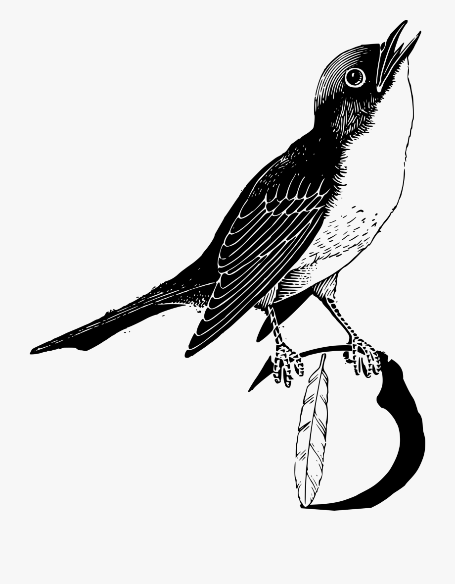 Png transparent feathers clip. Feather clipart bird feather