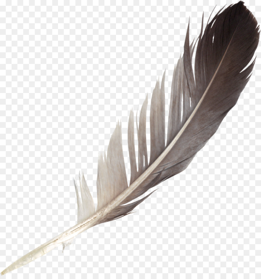 Wing png download free. Feather clipart bird feather
