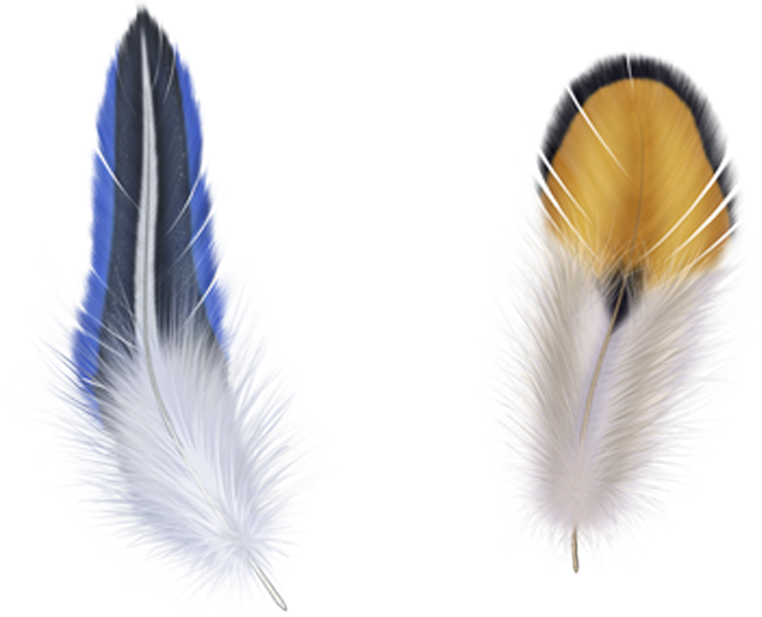 Wing clipart feather wing. Bird clip art blue