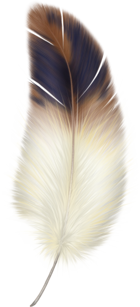 Png feathers watercolor and. Feather clipart brown