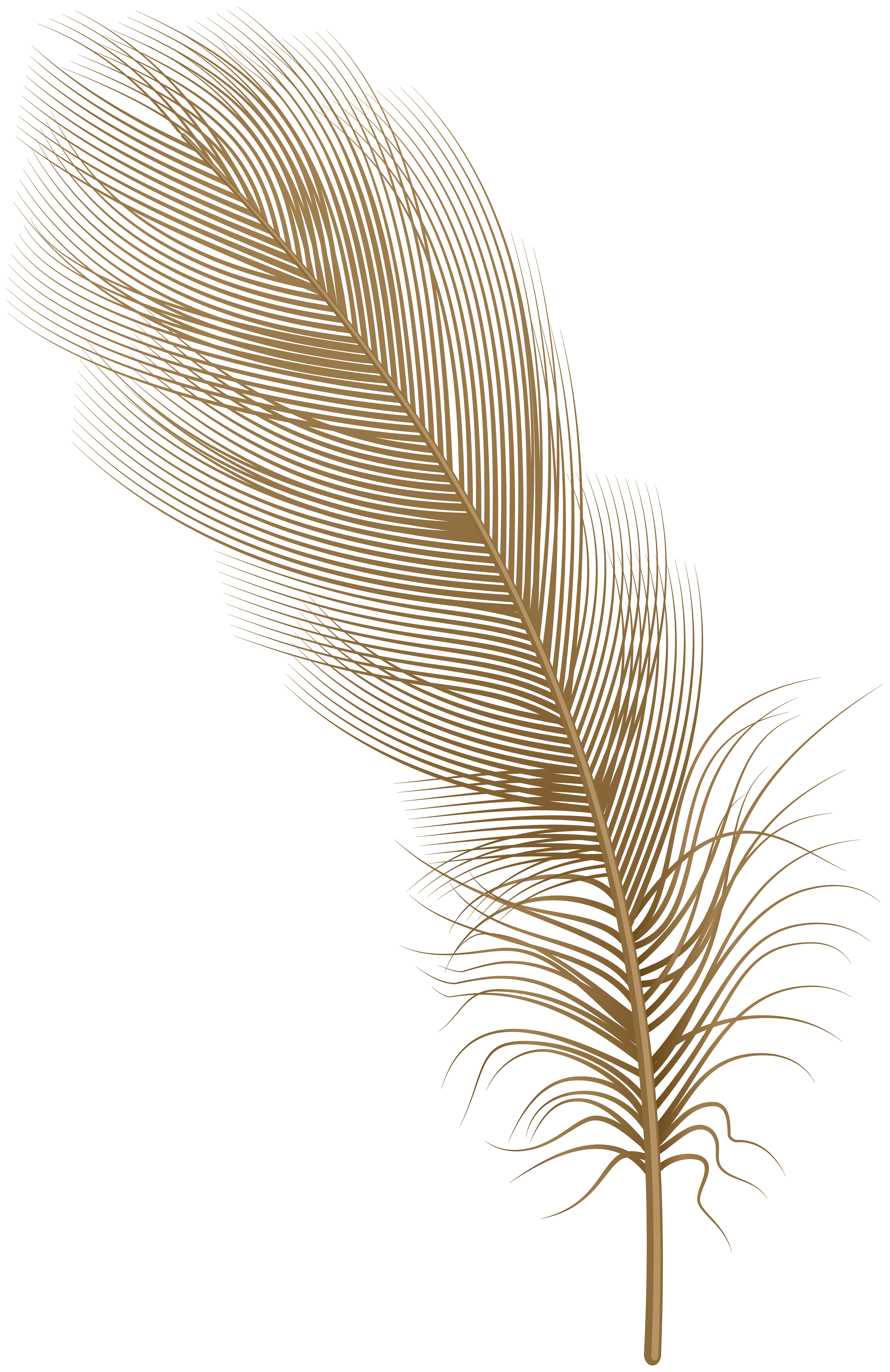Png clip art gallery. Feather clipart brown