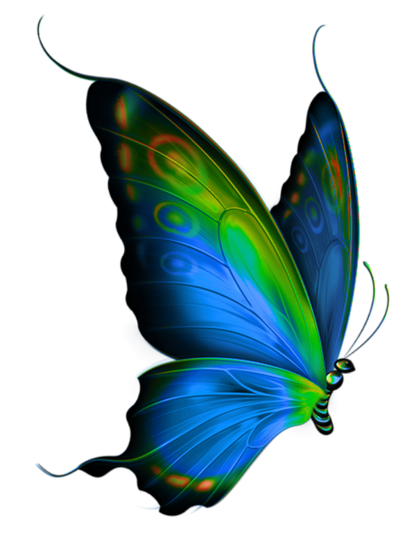 Tubes papillons tatouages pinterest. Feather clipart butterfly